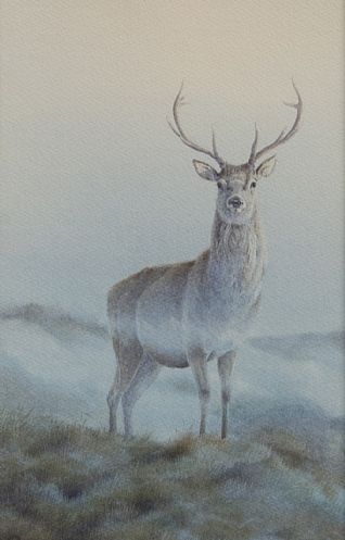 Stag Morning Mist by Owen Williams