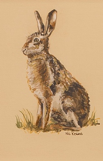 Young Hare by Nicola Kevane