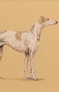 Piper the Greyhound  by Nicola Kevane