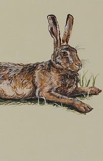Hare Resting in Spring Wheat by Nicola Kevane