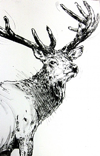 Stag in Velvet by Emerson Mayes