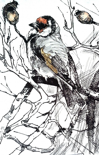January Goldfinch by Emerson Mayes