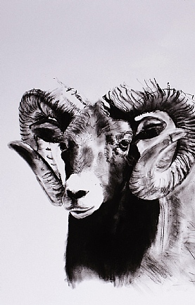 Mouflon by Katie Hargreaves