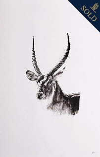 Waterbuck by Katie Hargreaves