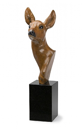 Roe Doe Head by David Cemmick