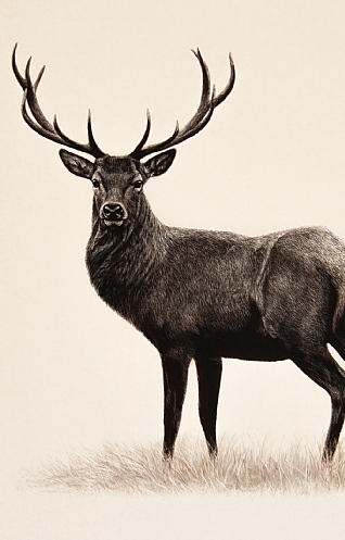 Small Stag by Keith Sykes