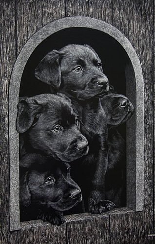 Labrador Puppies in Kennel by Keith Sykes