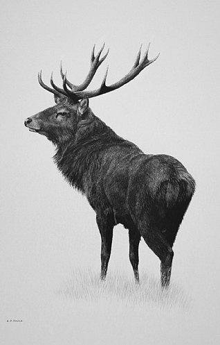 Red Stag by Keith Sykes