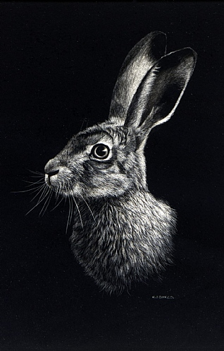 Leveret by Keith Sykes