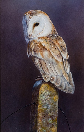 Barn Owl by W.A. Westwood
