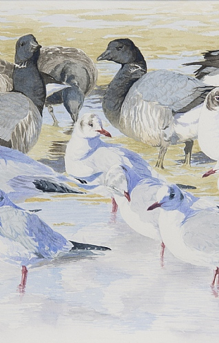 Brent Geese and Black Headed Gulls by Ian Rendall