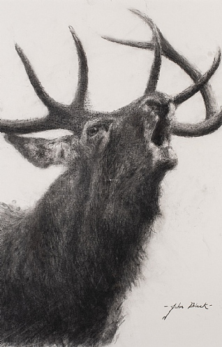 Roaring Ten Pointer Stag by John Black