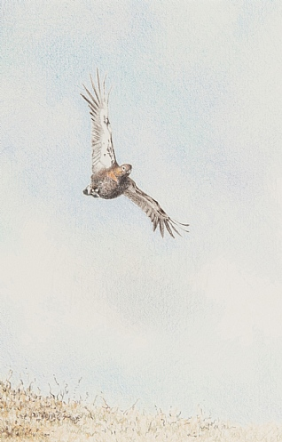 Grouse in Flight by Rosie Johnson