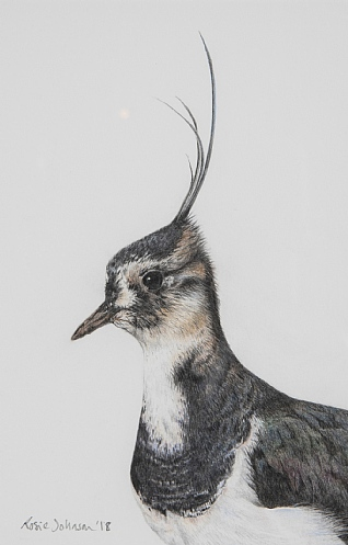 Lapwing by Rosie Johnson