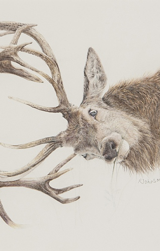Stags by Rosie Johnson