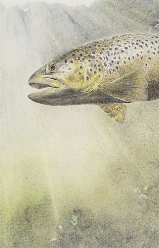Trout by Rosie Johnson